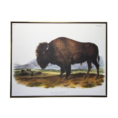 Buffalo Theme Art Print